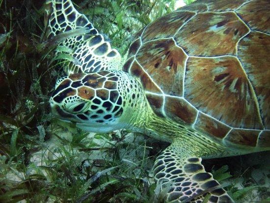 Lindquist Beach : Sea Turtle