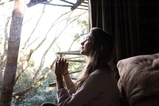 Harkerville, Sydafrika: Tsala Treetop Lodge
