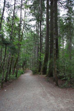 Нанаймо, Канада: Trail towards the bridge over the river