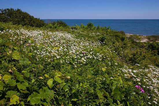 "Siasconset, MA: View from the ""Sconset Bluff Walk"""