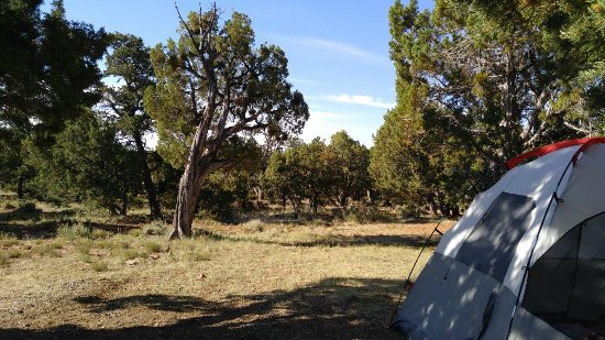 Desert View Campground: Flat shaded tent site