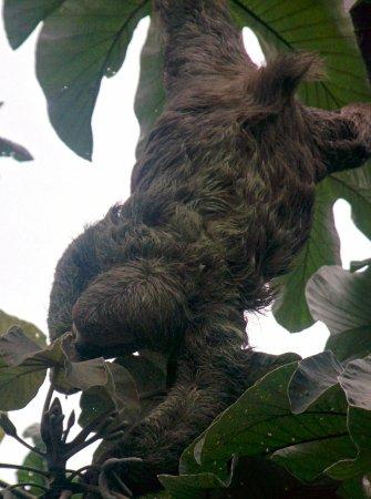 Costa Rica Jade Tours: IMG_20160708_101752_large.jpg