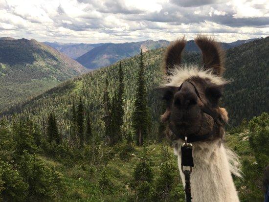 Swan Mountain Llama Trekking: 4 day llama trek