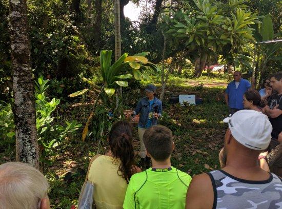 Kilauea, HI: Exploring the crops