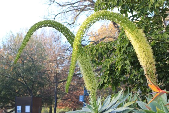 Royal Botanic Gardens Melbourne : photo1.jpg