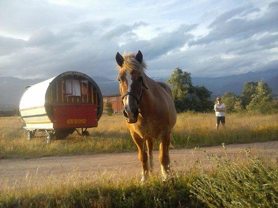 Villanueva de la Vera, สเปน: Caramelo, el principal protagonista