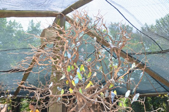 The Gulf Breeze ZOO: The Budgie tree