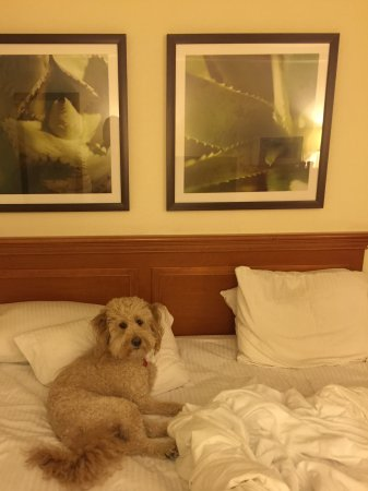La Quinta Inn & Suites Salt Lake City Layton: Pet loved it!