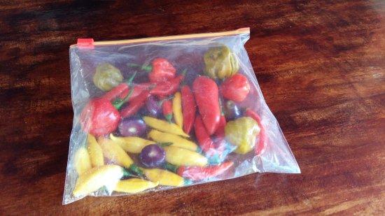 La Garita, كوستاريكا: Peppers of Peter