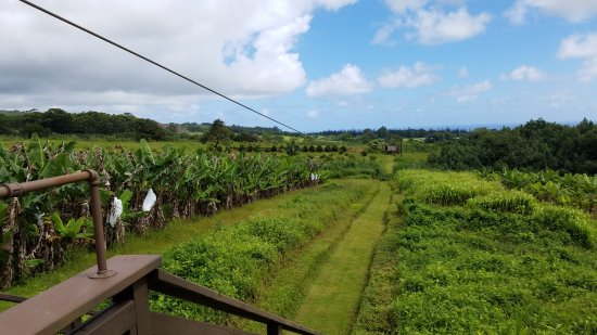 Honomu, Hawaï: one of the medium ziplines