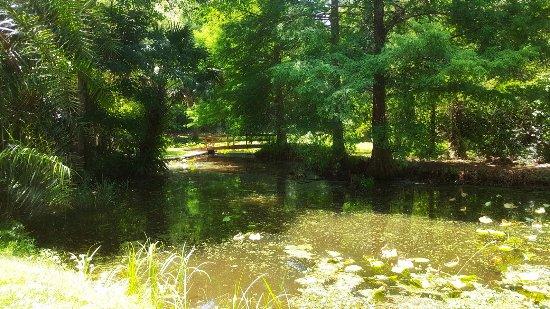 Ravine Gardens - Picture of Ravine Gardens State Park, Palatka ...