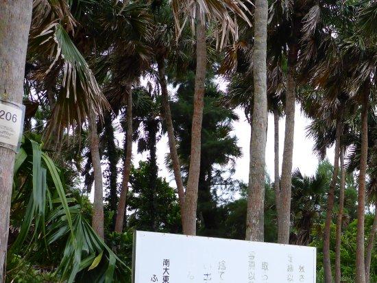 Minamidaito-son, Japão: 日の丸展望台