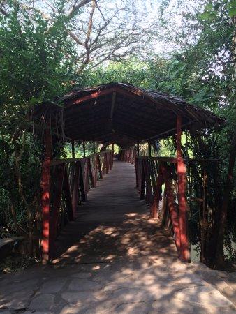 Fig Tree Camp: The Bridge leading to the safari park