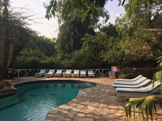 Fig Tree Camp: The charming pool near to the bar