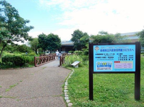 Shinjiko Nature Museum Gobius: 自然館の外観