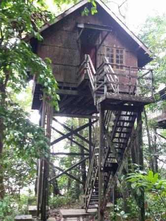 Permai Rainforest Resort: 20160625_123820_large.jpg