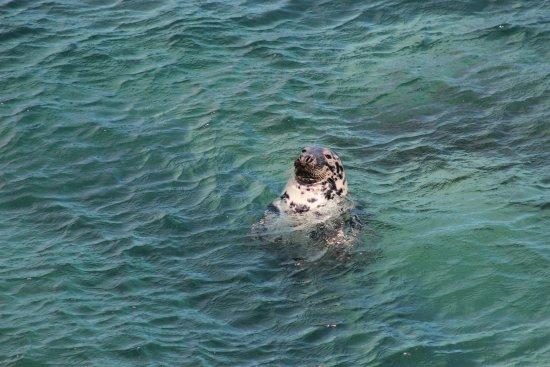 Betws Garmon, UK: Seal watching at Morfa Nefyn