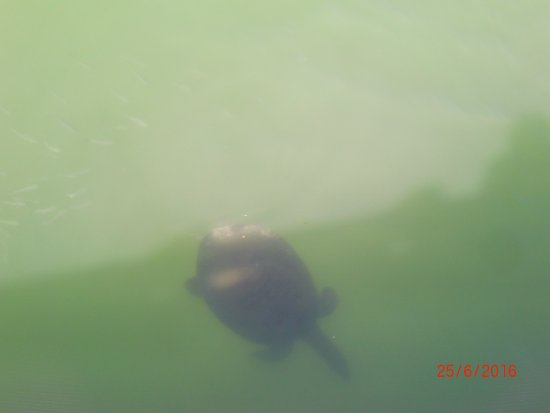 PrimaSol Hane Garden: Schildkröten in den Flüssen am Strand