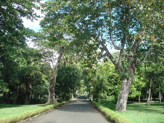 SSR Botanic Garden: Almond-tree from India