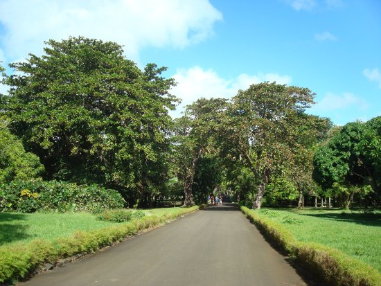 SSR Botanic Garden: Row with trees on both parts