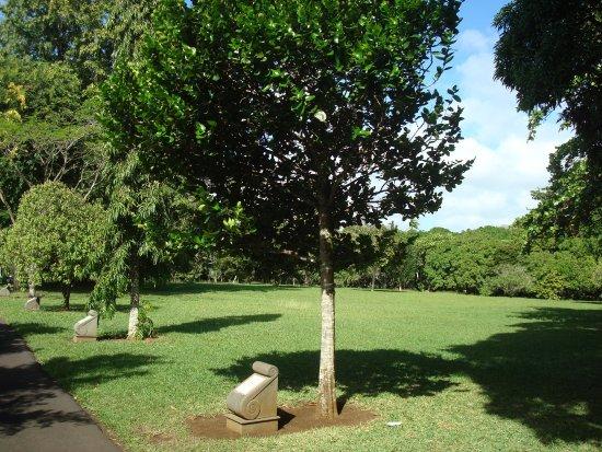 SSR Botanic Garden: Diospyros egrettarum ebony (Tree plantee by Nelson Mandela)