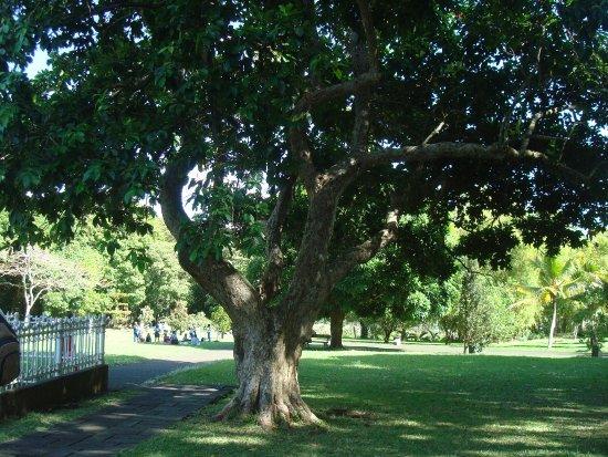 SSR Botanic Garden: Cassis
