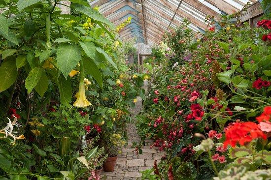 Parham House & Gardens: Glasshouse, Parham, July 2016