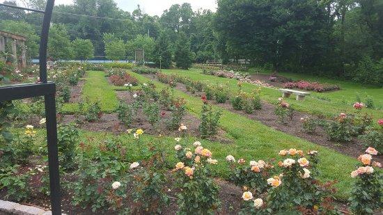 Beautiful Rose Garden - Review of Bon Air Park, Arlington, VA ...