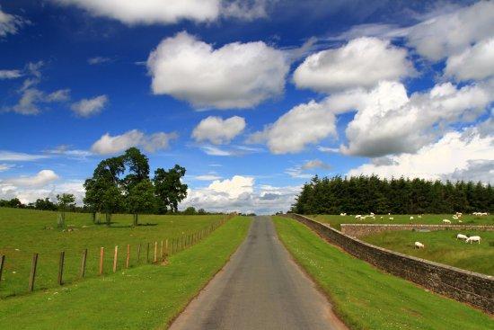 Hulne Park: Path through the estate