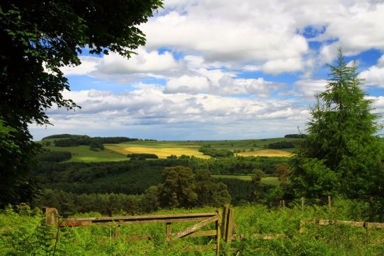 Hulne Park: View from the walk uphill to Brizlee Tower