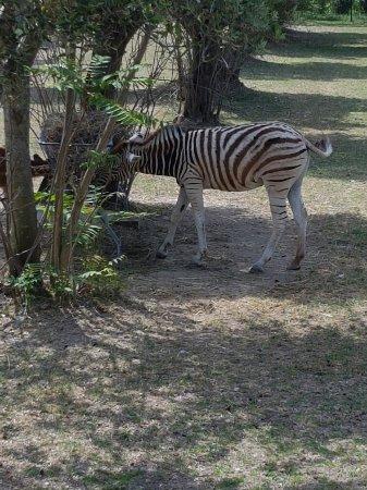 Zoo Delle Maitine