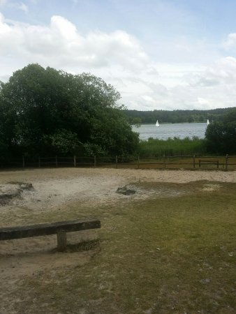 Frensham, UK: 20160710_150617_large.jpg