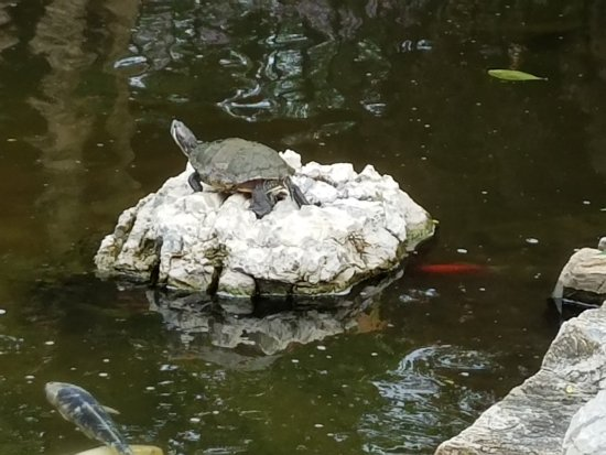 Мелвилл, Нью-Йорк: Turtle chilling out on his piece of landscape!