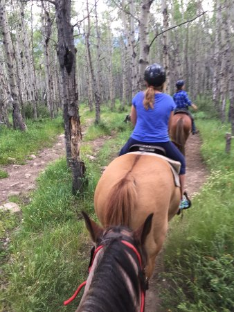 Jasper Riding Stables: photo0.jpg