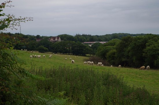 Fowley Cross, UK: View from road