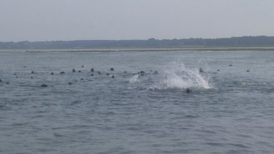 Nauset Inlet : A bit startled - time to dive.