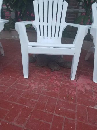 Hotel Mary Carmen: Turtles of mary carmen