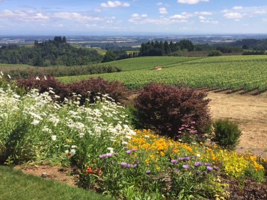Dayton, OR: Oregon's Wine Country is the BEST