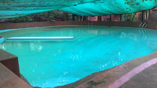 Cemented swimming pool with net covering - Picture of Hidden ...