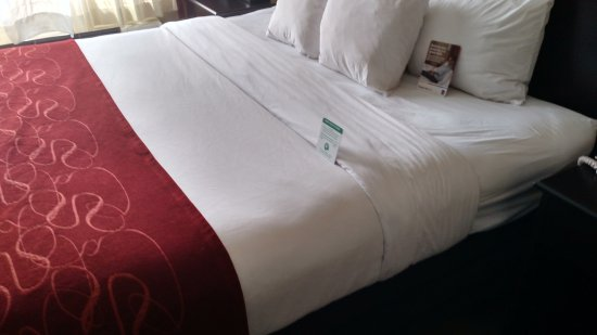 Englewood, CO: Comfortable bed with soft sheets with the usual horrible Choice Hotels Pillows.
