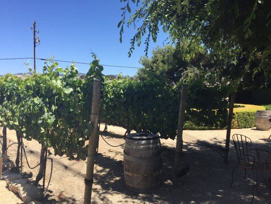 Claiborne & Churchill Winery: The service was great and the wine tasting selection was wonderful. It's quiet and easy to acces