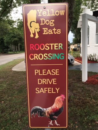 Yellow Dog Eats: Why did the Rooster cross the road??