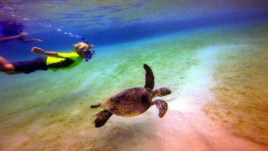 Snorkel with turtles in Puako!