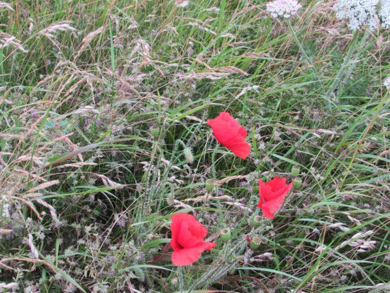 Worth Matravers, UK: Natural beauty in the hedgerows and cliff tops