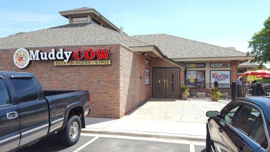 Muddy Cow