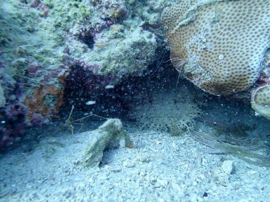 Dolphin Dive: Toad Fish, Spider Crab and Shrimp