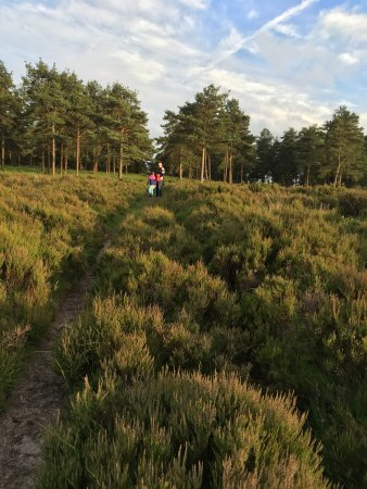 Hartfield, UK: Old Lodge Nature Reserve