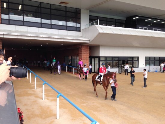 Hakodate Horse Racetrack: photo3.jpg