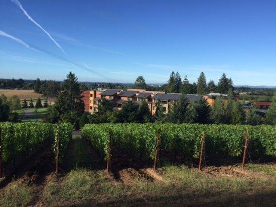 Allison Inn & Spa: Vineyards on the grounds of the Allison Inn and Spa