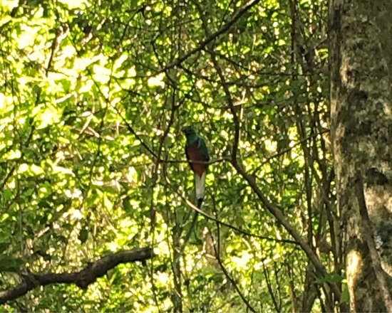 Sendero Los Quetzales (The Quetzales Trail): Pictures of General Boquete. I actually saw the Quatzals at Finca Lerada after two unsuccessful